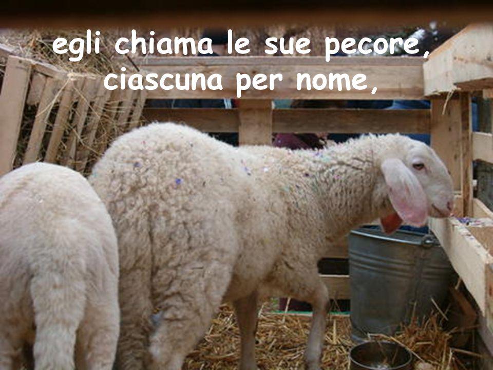 egli chiama le sue pecore, ciascuna per nome,