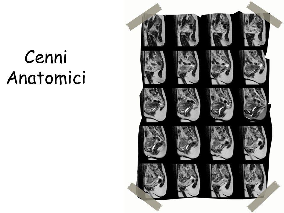 Piani di scansione Piano coronale per l'utero: 24-32 strati, da 3-5 mm Se invece lo studio e' per l'utero, occorrono degli accorgimenti particolari.