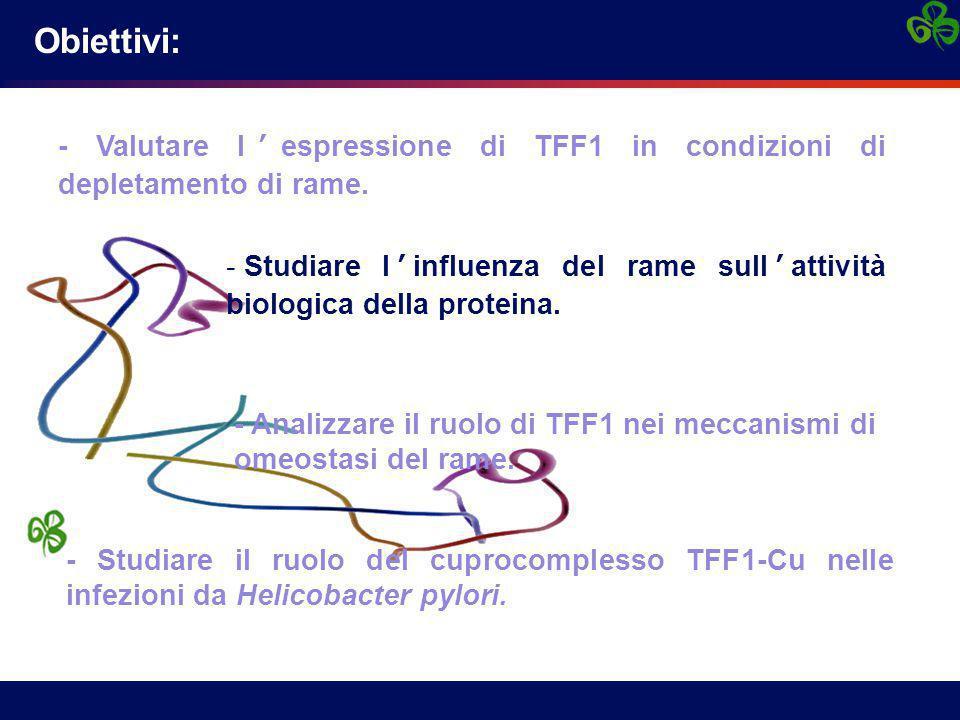 - Valutare l'espressione di TFF1 in condizioni di depletamento di rame. - Studiare l'influenza del rame sull'attività biologica della proteina. - Stud