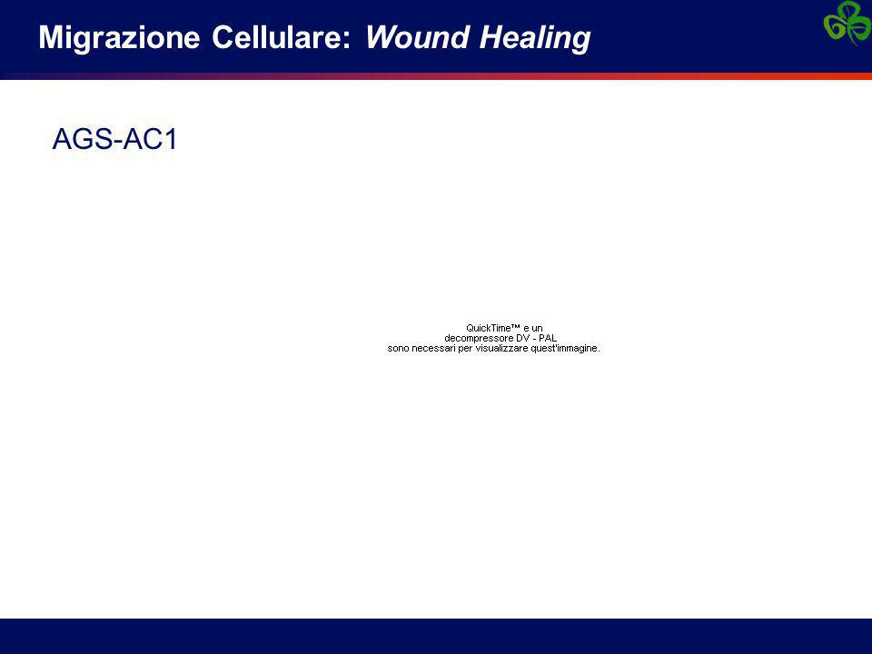 Migrazione Cellulare: Wound Healing AGS-AC1