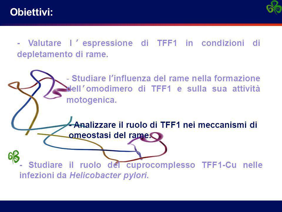 - Valutare l'espressione di TFF1 in condizioni di depletamento di rame. - Studiare l'influenza del rame nella formazione dell'omodimero di TFF1 e sull