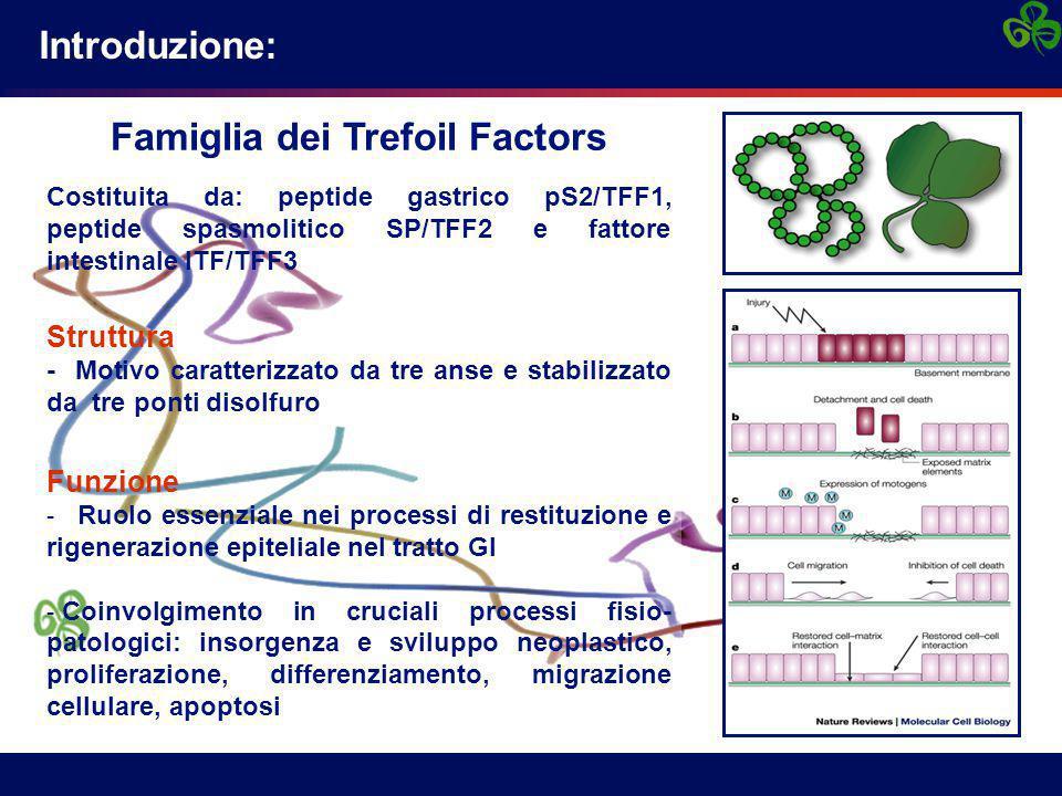 Introduzione: Famiglia dei Trefoil Factors Costituita da: peptide gastrico pS2/TFF1, peptide spasmolitico SP/TFF2 e fattore intestinale ITF/TFF3 Struttura - Motivo caratterizzato da tre anse e stabilizzato da tre ponti disolfuro Funzione - Ruolo essenziale nei processi di restituzione e rigenerazione epiteliale nel tratto GI - Coinvolgimento in cruciali processi fisio- patologici: insorgenza e sviluppo neoplastico, proliferazione, differenziamento, migrazione cellulare, apoptosi