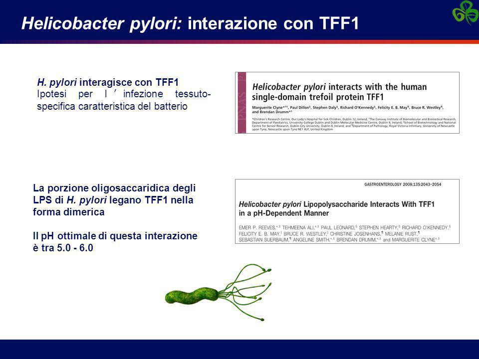 Helicobacter pylori: interazione con TFF1 H. pylori interagisce con TFF1 Ipotesi per l'infezione tessuto- specifica caratteristica del batterio La por