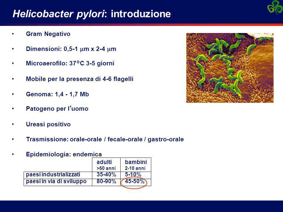 Helicobacter pylori: introduzione Gram Negativo Dimensioni: 0,5-1  m x 2-4  m Microaerofilo: 37°C 3-5 giorni Mobile per la presenza di 4-6 flagelli