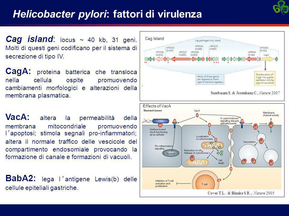 Helicobacter pylori: fattori di virulenza Cag island: locus ~ 40 kb, 31 geni. Molti di questi geni codificano per il sistema di secrezione di tipo IV.