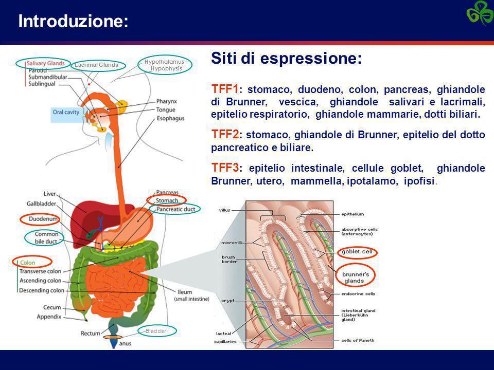 Introduzione: Lacrimal Glands Hypothalamus – Hypophysis Bladder Siti di espressione: TFF1 : stomaco, duodeno, colon, pancreas, ghiandole di Brunner, v