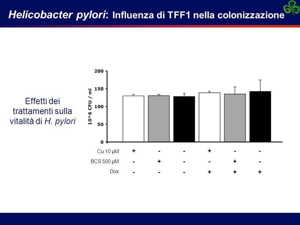 Helicobacter pylori: Influenza di TFF1 nella colonizzazione Effetti dei trattamenti sulla vitalità di H.