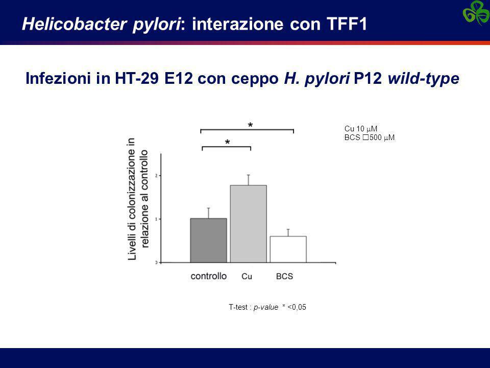 Helicobacter pylori: interazione con TFF1 Infezioni in HT-29 E12 con ceppo H. pylori P12 wild-type T-test : p-value * <0,05 Cu 10  M BCS 500  M