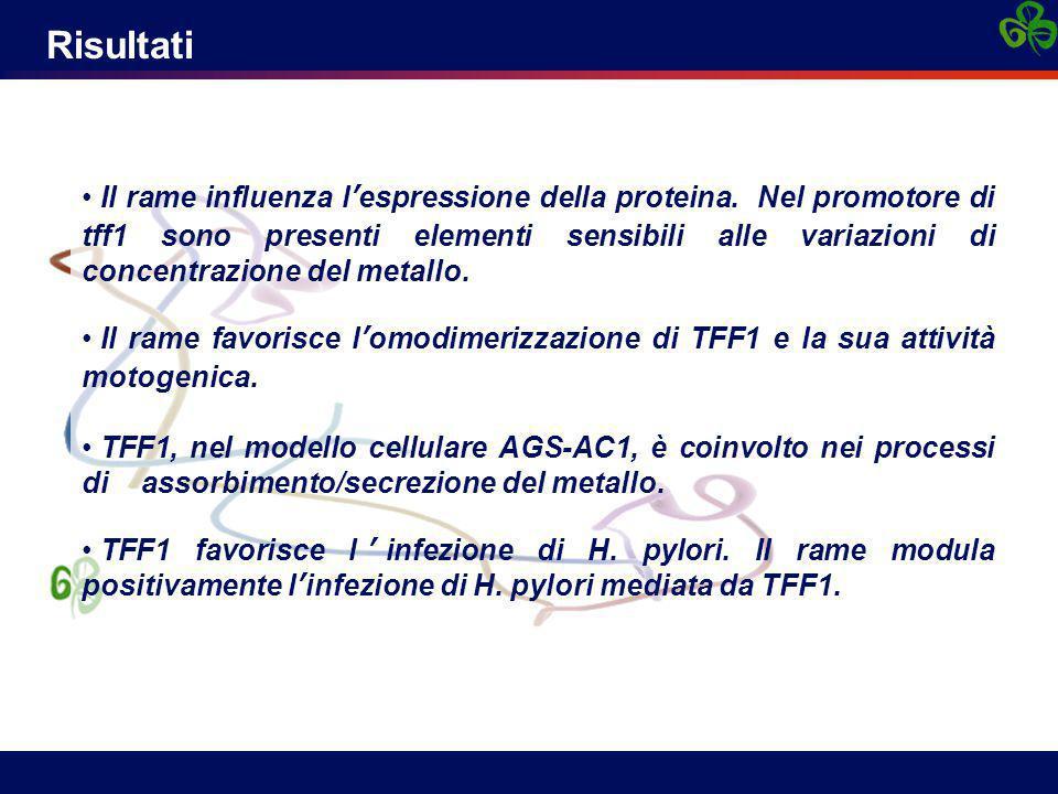Risultati Il rame influenza l'espressione della proteina. Nel promotore di tff1 sono presenti elementi sensibili alle variazioni di concentrazione del