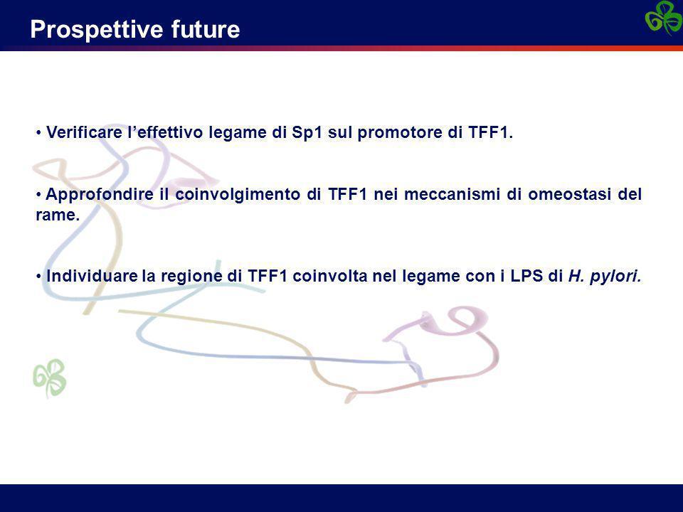 Prospettive future Verificare l'effettivo legame di Sp1 sul promotore di TFF1. Approfondire il coinvolgimento di TFF1 nei meccanismi di omeostasi del