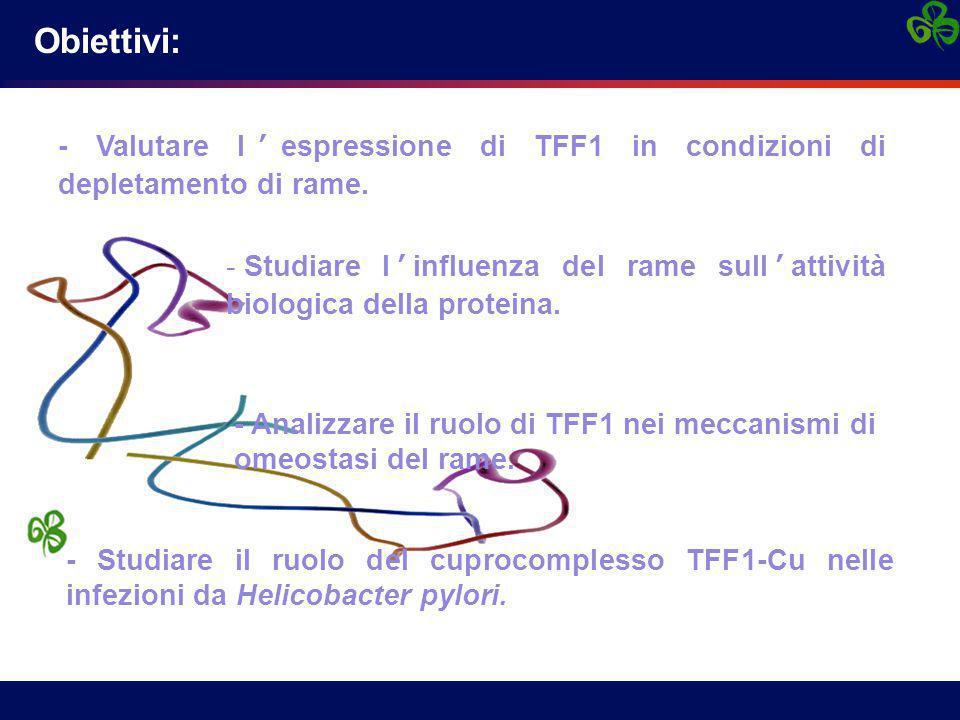 Helicobacter pylori: interazione con TFF1 Infezioni in HT-29 E12 con ceppo H.