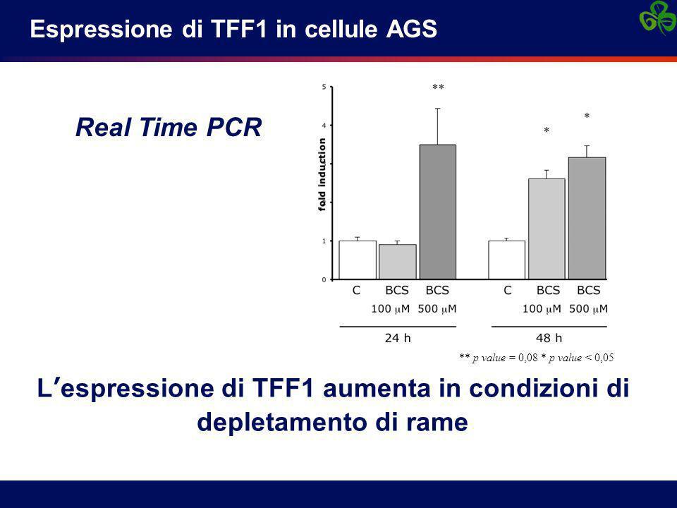Espressione di TFF1 in cellule AGS L'espressione di TFF1 aumenta in condizioni di depletamento di rame Real Time PCR ** p value = 0,08 * p value < 0,05