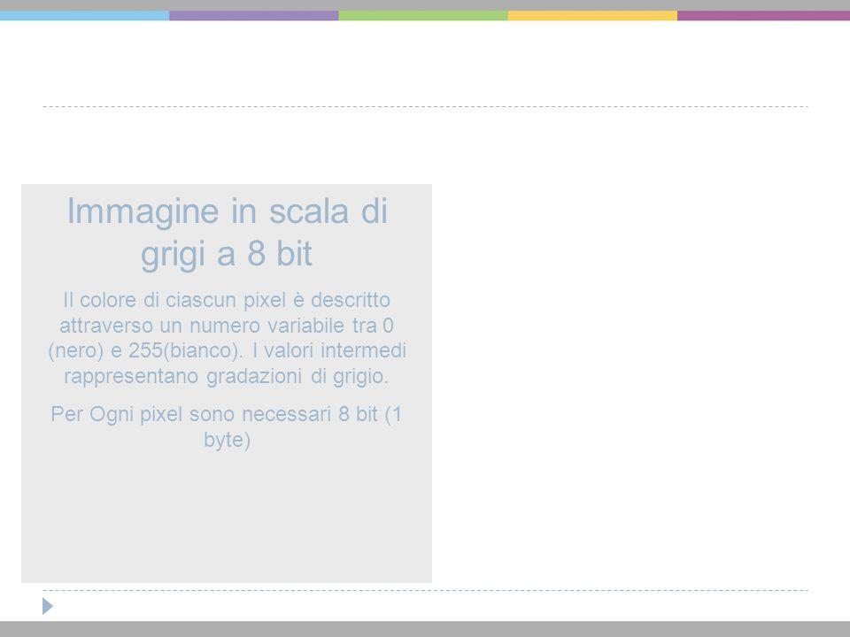 Immagine in scala di grigi a 8 bit Il colore di ciascun pixel è descritto attraverso un numero variabile tra 0 (nero) e 255(bianco). I valori intermed
