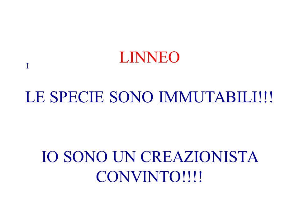 I LINNEO LE SPECIE SONO IMMUTABILI!!! IO SONO UN CREAZIONISTA CONVINTO!!!!