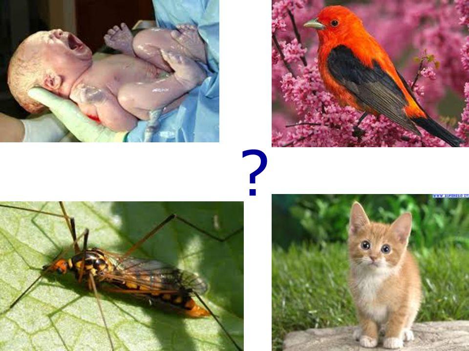 la paleontologia, l anatomia comparata, l embriologia comparata, la biologia molecolare, la biogeografia VUOI DELLE PROVE DELLA MIA TEORIA.
