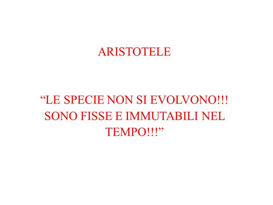 """ARISTOTELE """"LE SPECIE NON SI EVOLVONO!!! SONO FISSE E IMMUTABILI NEL TEMPO!!!"""""""