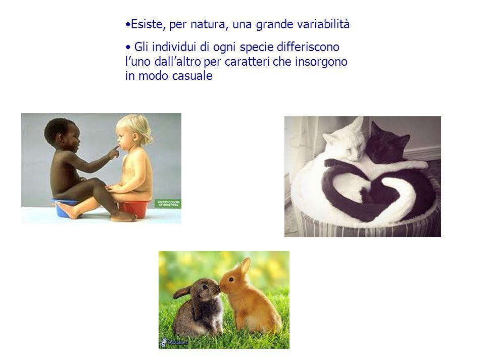 Esiste, per natura, una grande variabilità Gli individui di ogni specie differiscono l'uno dall'altro per caratteri che insorgono in modo casuale