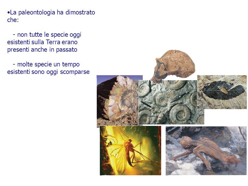 La paleontologia ha dimostrato che: - non tutte le specie oggi esistenti sulla Terra erano presenti anche in passato - molte specie un tempo esistenti