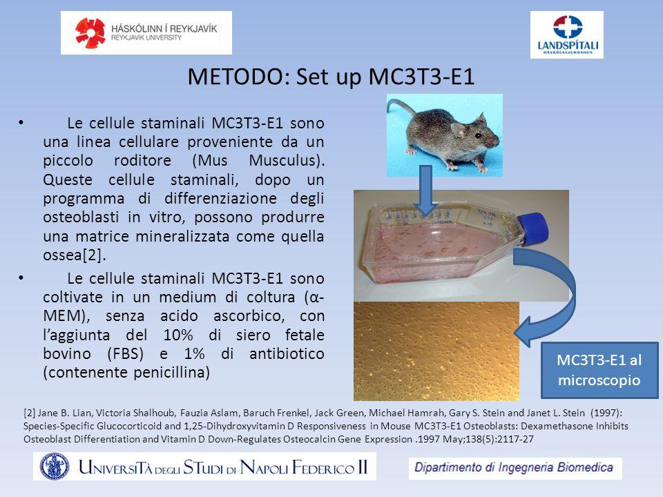 METODO: Set up MC3T3-E1 Le cellule staminali MC3T3-E1 sono una linea cellulare proveniente da un piccolo roditore (Mus Musculus). Queste cellule stami