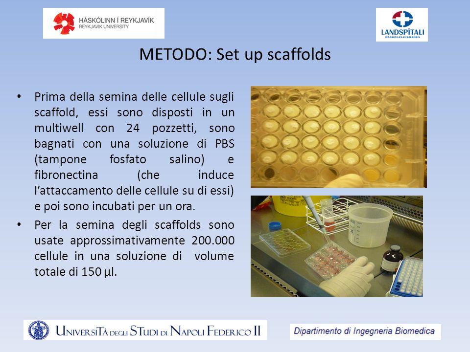 METODO: Set up scaffolds Prima della semina delle cellule sugli scaffold, essi sono disposti in un multiwell con 24 pozzetti, sono bagnati con una sol