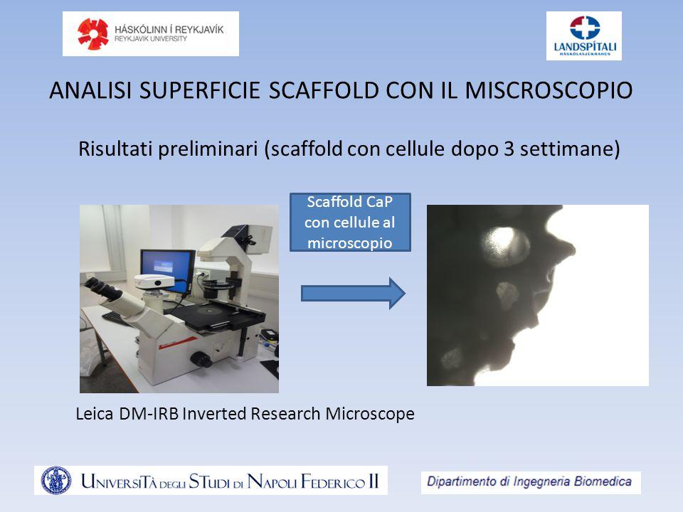 ANALISI SUPERFICIE SCAFFOLD CON IL MISCROSCOPIO Risultati preliminari (scaffold con cellule dopo 3 settimane) Scaffold CaP con cellule al microscopio