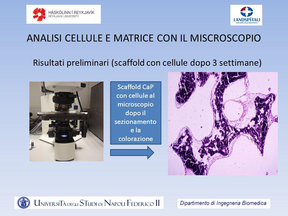 ANALISI CELLULE E MATRICE CON IL MISCROSCOPIO Risultati preliminari (scaffold con cellule dopo 3 settimane) Scaffold CaP con cellule al microscopio do