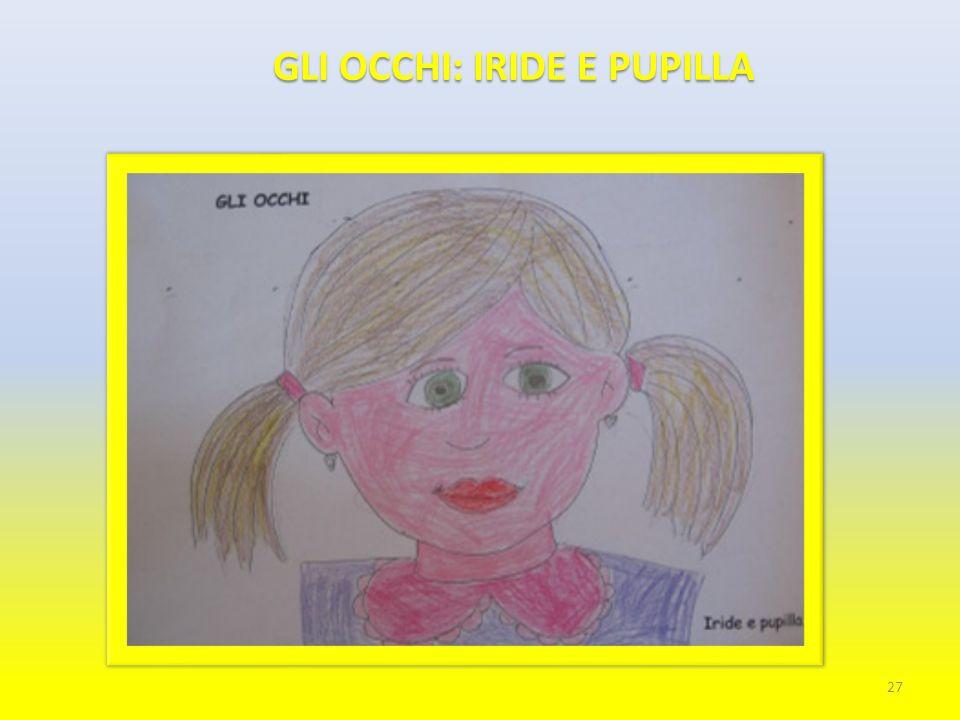 GLI OCCHI: IRIDE E PUPILLA 27