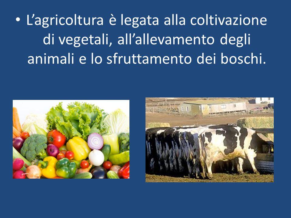 L'agricoltura è legata alla coltivazione di vegetali, all'allevamento degli animali e lo sfruttamento dei boschi.