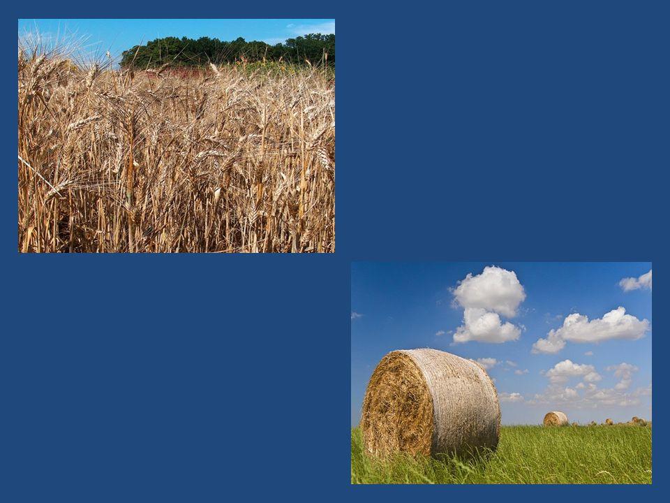 Per migliorare le condizioni delle piante, l'uomo effettua molti interventi sia sul terreno, sia sulle piante stesse.