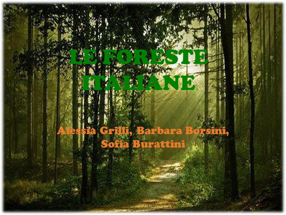 LE FORESTE ITALIANE Alessia Grilli, Barbara Borsini, Sofia Burattini