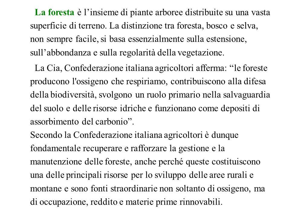 In questa ricerca approfondiremo la situazione delle foreste in Italia.