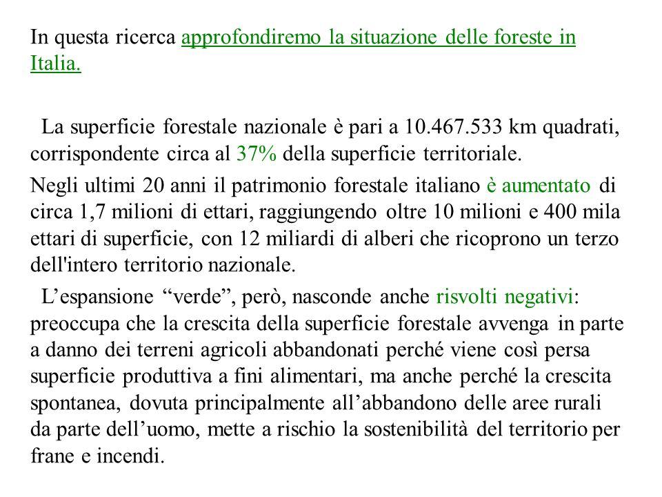 In questa ricerca approfondiremo la situazione delle foreste in Italia. La superficie forestale nazionale è pari a 10.467.533 km quadrati, corrisponde