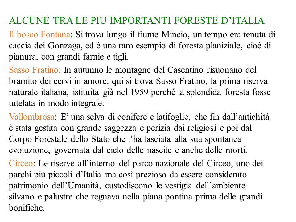 ALCUNE TRA LE PIU IMPORTANTI FORESTE D'ITALIA Il bosco Fontana: Si trova lungo il fiume Mincio, un tempo era tenuta di caccia dei Gonzaga, ed è una raro esempio di foresta planiziale, cioè di pianura, con grandi farnie e tigli.