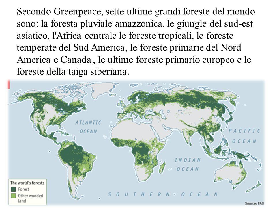 Secondo Greenpeace, sette ultime grandi foreste del mondo sono: la foresta pluviale amazzonica, le giungle del sud-est asiatico, l Africa centrale le foreste tropicali, le foreste temperate del Sud America, le foreste primarie del Nord America e Canada, le ultime foreste primario europeo e le foreste della taiga siberiana.