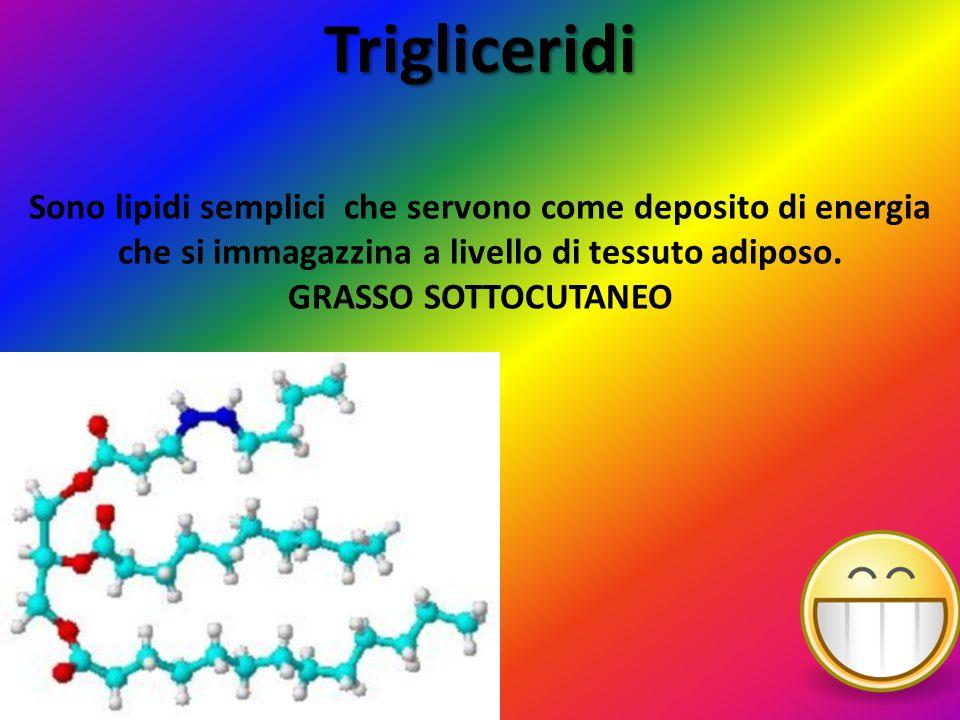Trigliceridi Sono lipidi semplici che servono come deposito di energia che si immagazzina a livello di tessuto adiposo. GRASSO SOTTOCUTANEO