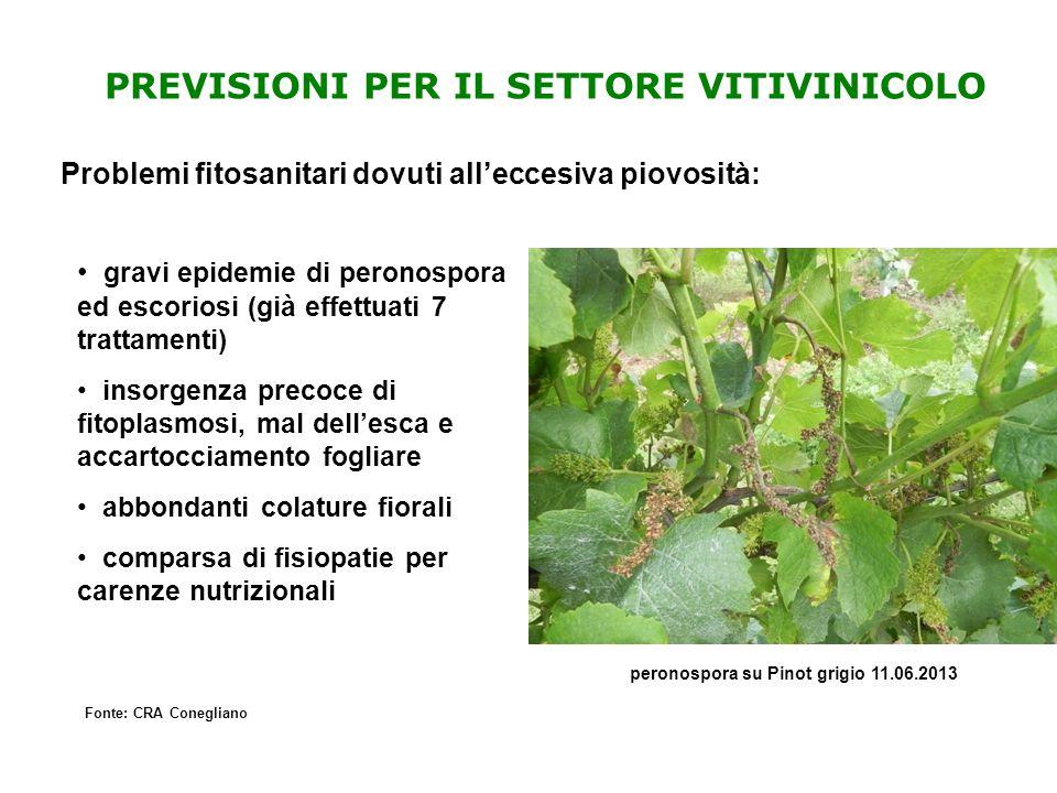 PREVISIONI PER IL SETTORE VITIVINICOLO Problemi fitosanitari dovuti all'eccesiva piovosità: Fonte: CRA Conegliano gravi epidemie di peronospora ed esc