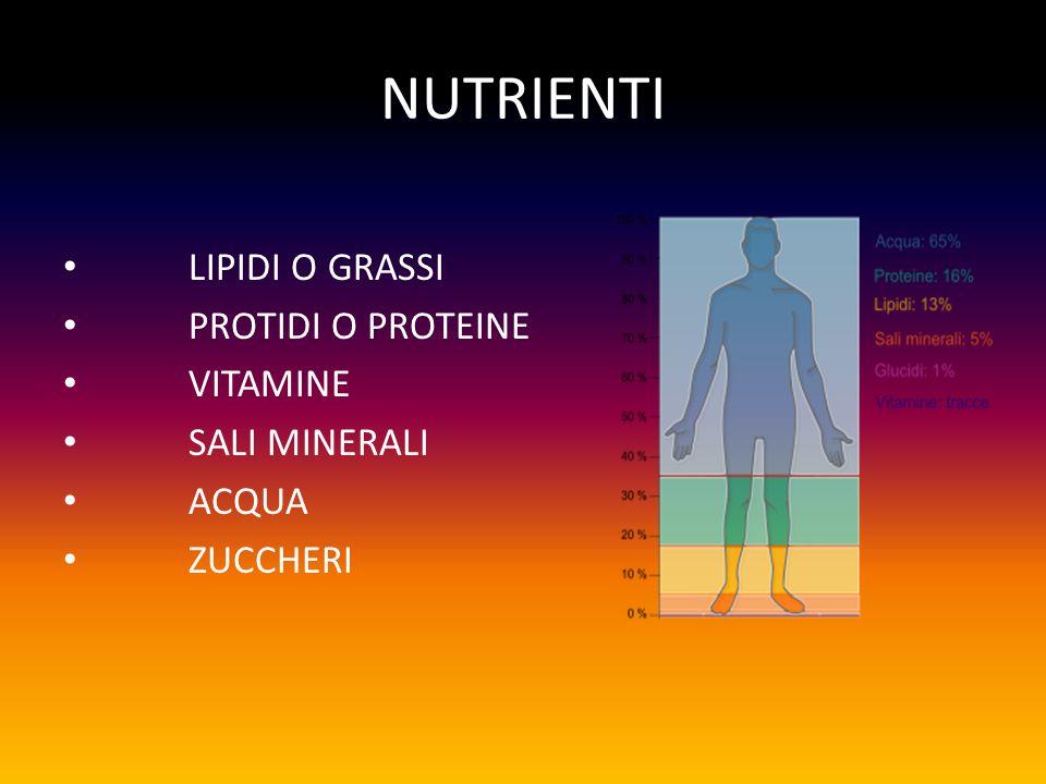 NUTRIENTI LIPIDI O GRASSI PROTIDI O PROTEINE VITAMINE SALI MINERALI ACQUA ZUCCHERI