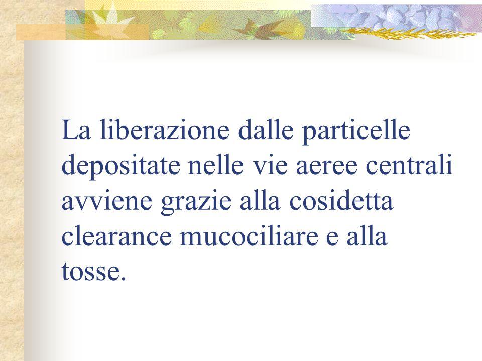 La liberazione dalle particelle depositate nelle vie aeree centrali avviene grazie alla cosidetta clearance mucociliare e alla tosse.