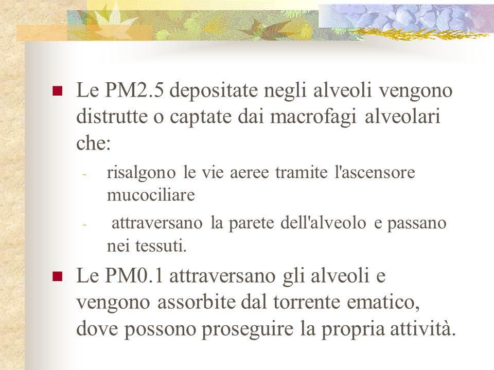 Le PM2.5 depositate negli alveoli vengono distrutte o captate dai macrofagi alveolari che: - risalgono le vie aeree tramite l'ascensore mucociliare -