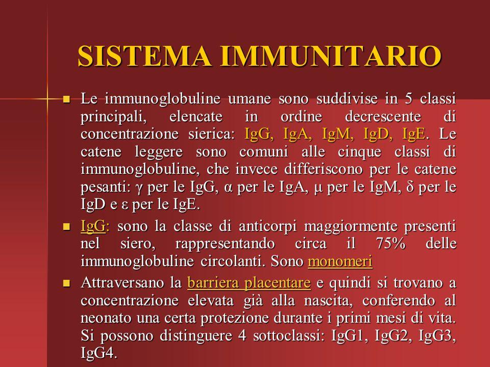 SISTEMA IMMUNITARIO Le immunoglobuline umane sono suddivise in 5 classi principali, elencate in ordine decrescente di concentrazione sierica: IgG, IgA