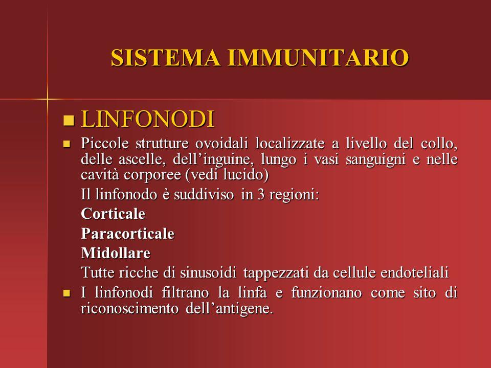 SISTEMA IMMUNITARIO LINFONODI LINFONODI Piccole strutture ovoidali localizzate a livello del collo, delle ascelle, dell'inguine, lungo i vasi sanguign