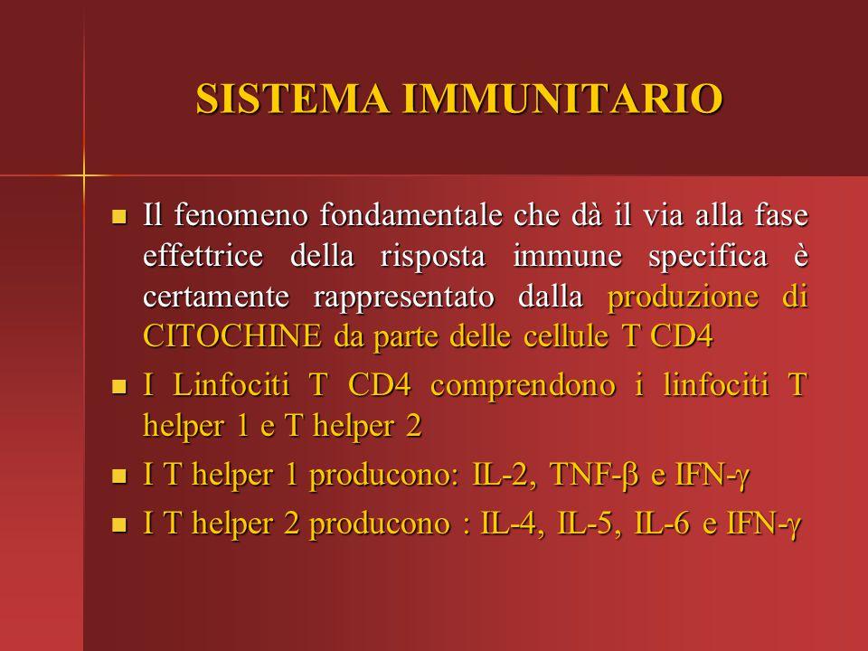 SISTEMA IMMUNITARIO Il fenomeno fondamentale che dà il via alla fase effettrice della risposta immune specifica è certamente rappresentato dalla produ