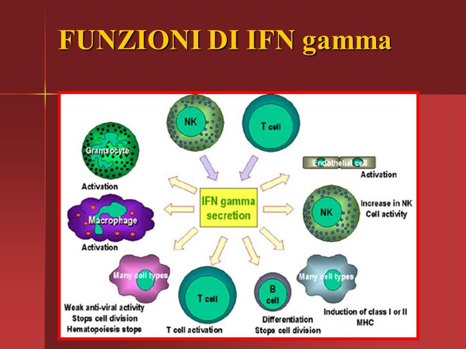 FUNZIONI DI IFN gamma