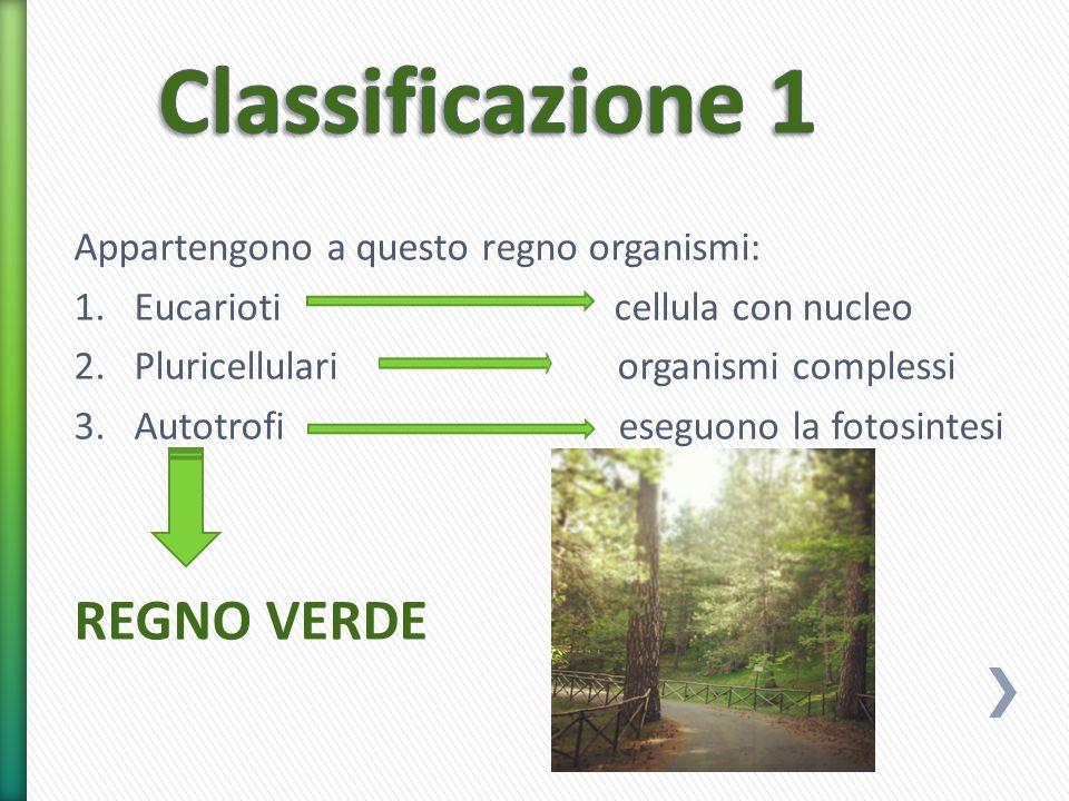 Appartengono a questo regno organismi: 1.Eucarioti cellula con nucleo 2.Pluricellulari organismi complessi 3.Autotrofi eseguono la fotosintesi REGNO V