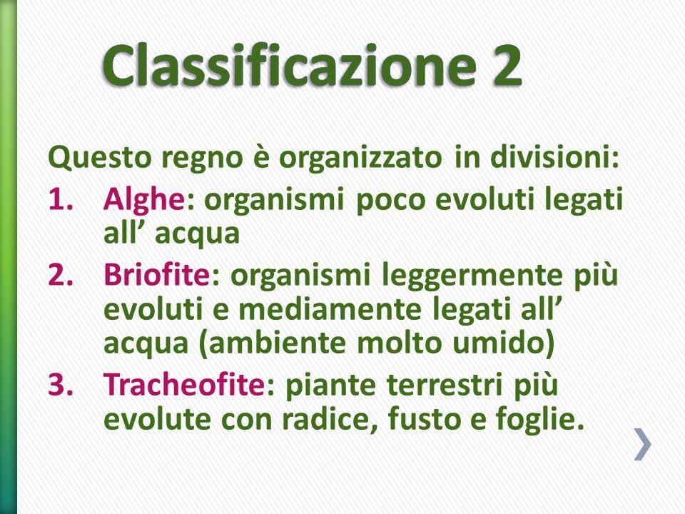 Questo regno è organizzato in divisioni: 1.Alghe: organismi poco evoluti legati all' acqua 2.Briofite: organismi leggermente più evoluti e mediamente