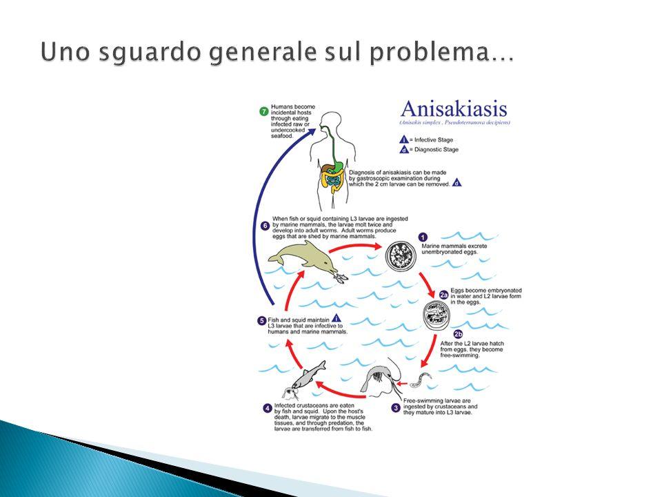 1.Individuazione e analisi dei pericoli 2. Individuazione dei punti critici di controllo 3.