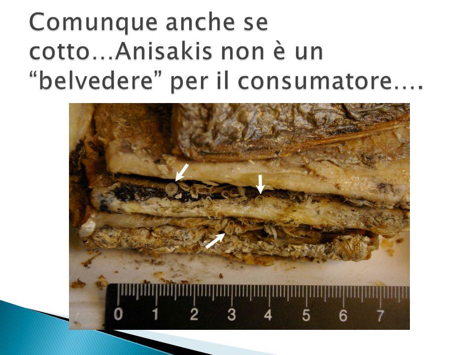 L'ispezione del pesce è un momento importante : una infestazione manifesta porta alla distruzione del prodotto