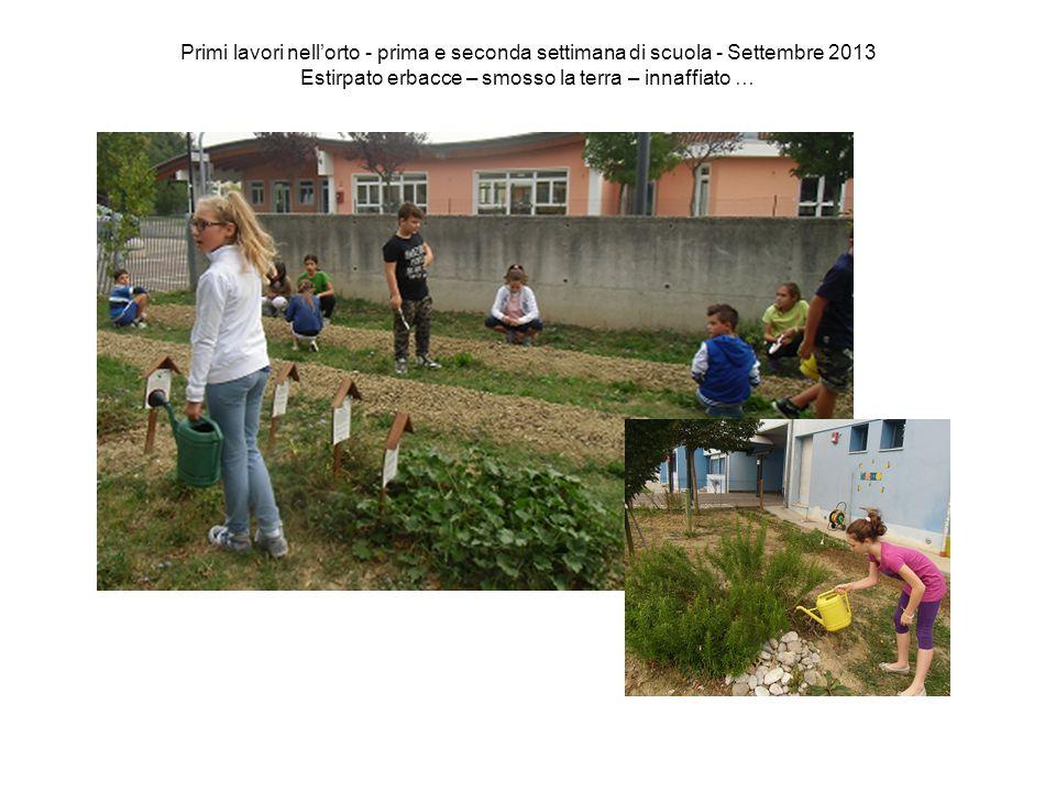 Primi lavori nell'orto - prima e seconda settimana di scuola - Settembre 2013 Estirpato erbacce – smosso la terra – innaffiato …