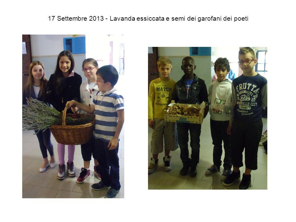 17 Settembre 2013 - Lavanda essiccata e semi dei garofani dei poeti