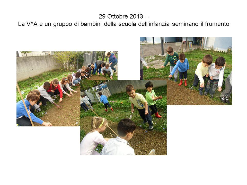 29 Ottobre 2013 – La V^A e un gruppo di bambini della scuola dell'infanzia seminano il frumento